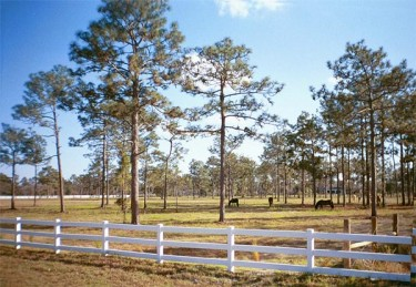 Prairie Creek Estates is perfect for horse farms