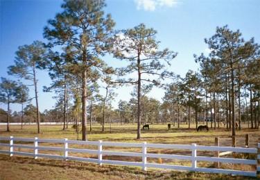 Prairie Creek Estates is perfect for horse farms